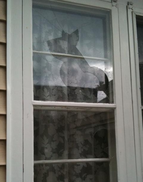 Hail window 1