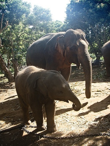 1.1259837307.baby-and-mommy-elephants