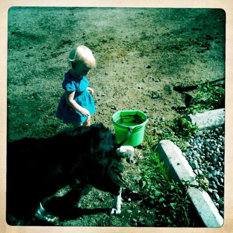 Dogs & muddy water