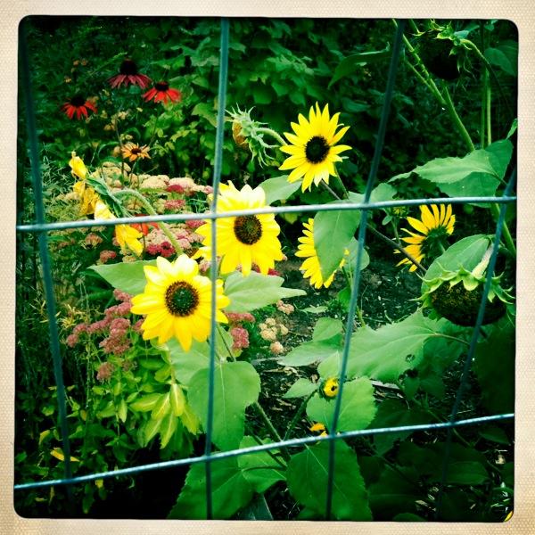 Flower zoo