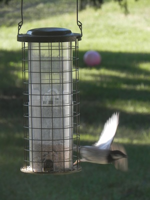 Bird flies from feeder