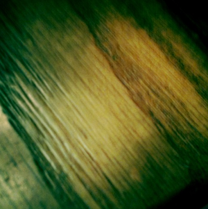 LO pic of the floor