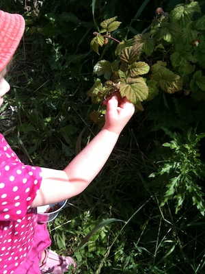 LO picks raspberries